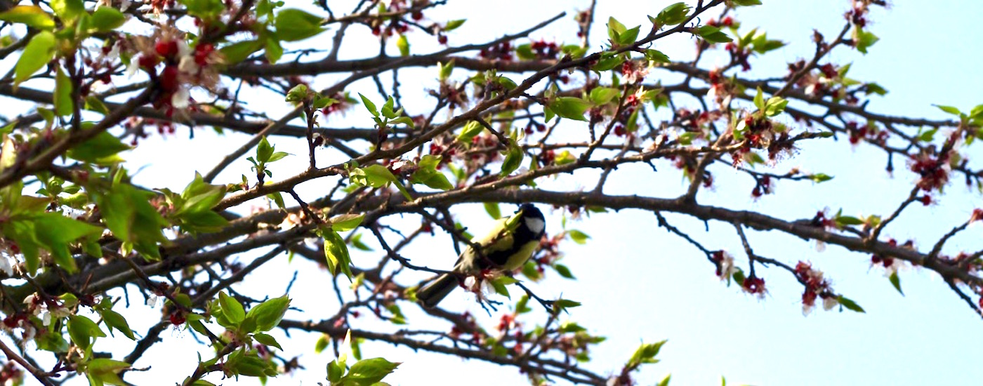 Twig-with-bird