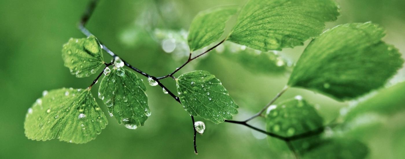 Twigs-with-dew