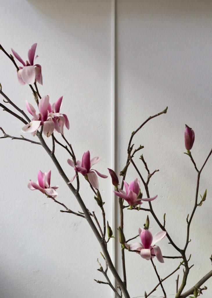 Magnolienzweig mit Blüten