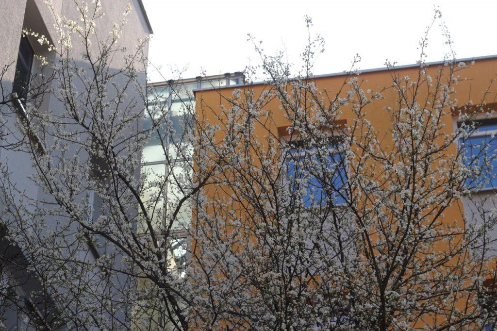 Blühender Baum vor Häusern