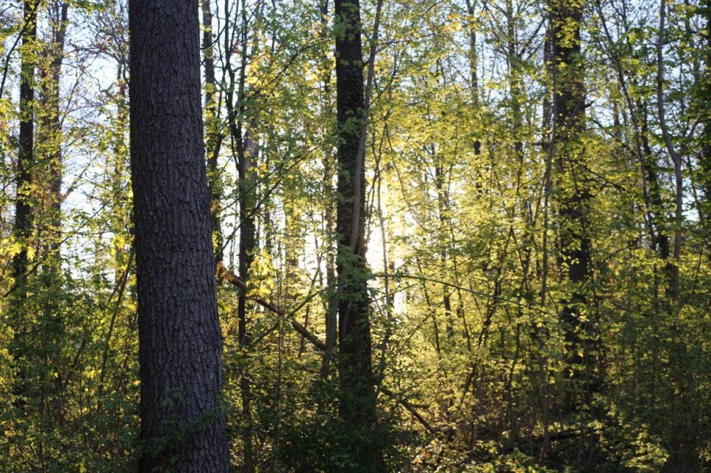 Frühlingswald im Sonnenlicht