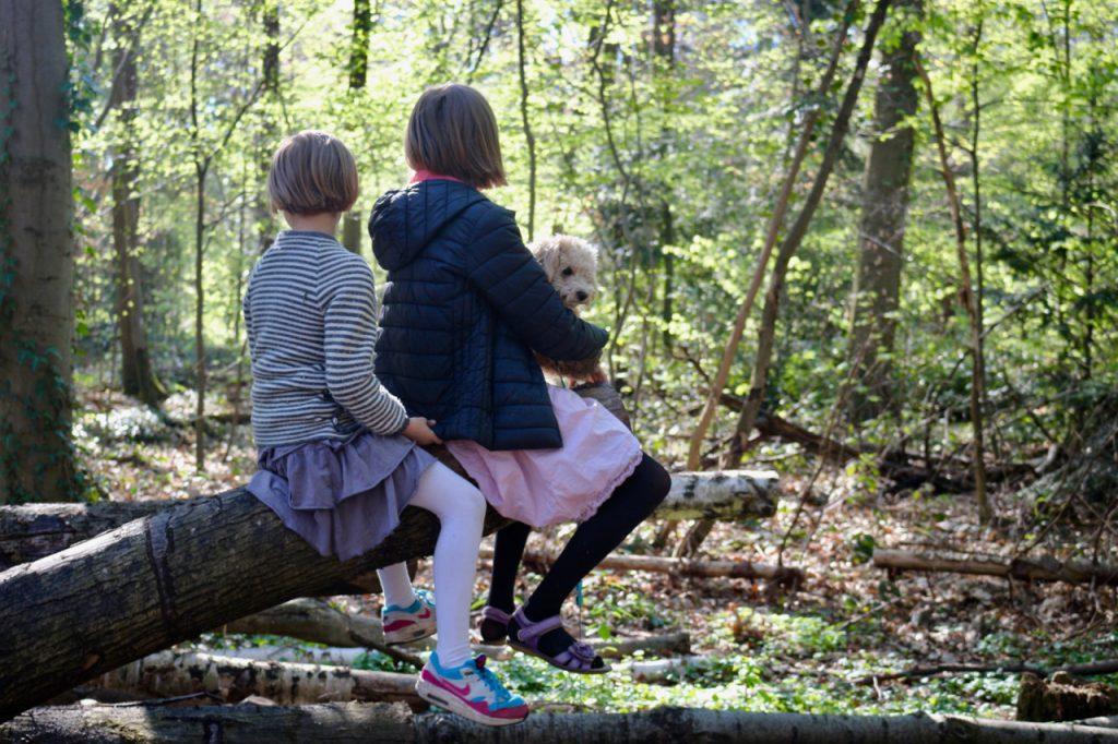 Zwei Kinder sitzen auf Baumstamm im Wald