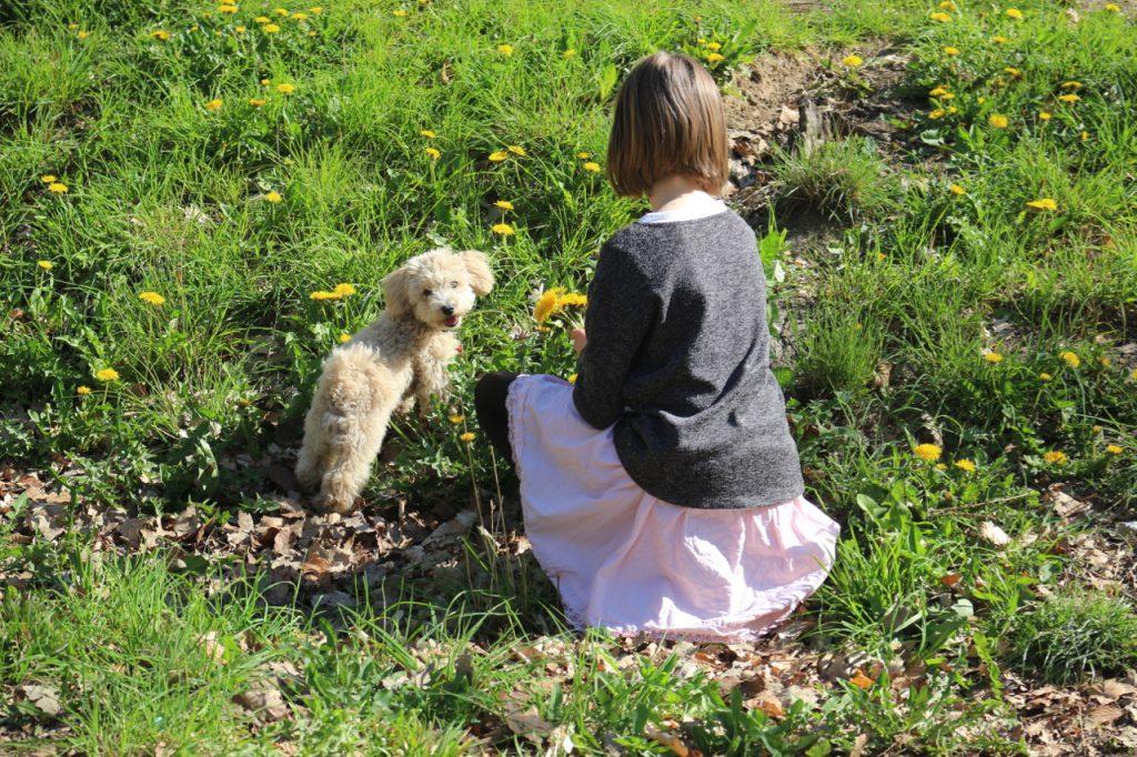 Kind (10) mit kleinem Hund auf Wiese, pflückt Löwenzahn