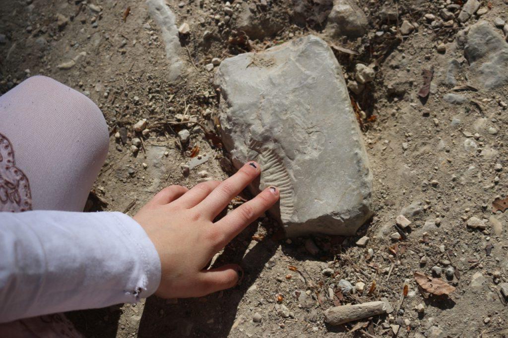 Kinderhand deutet auf kleine Versteinerung auf einem Stein auf Waldweg