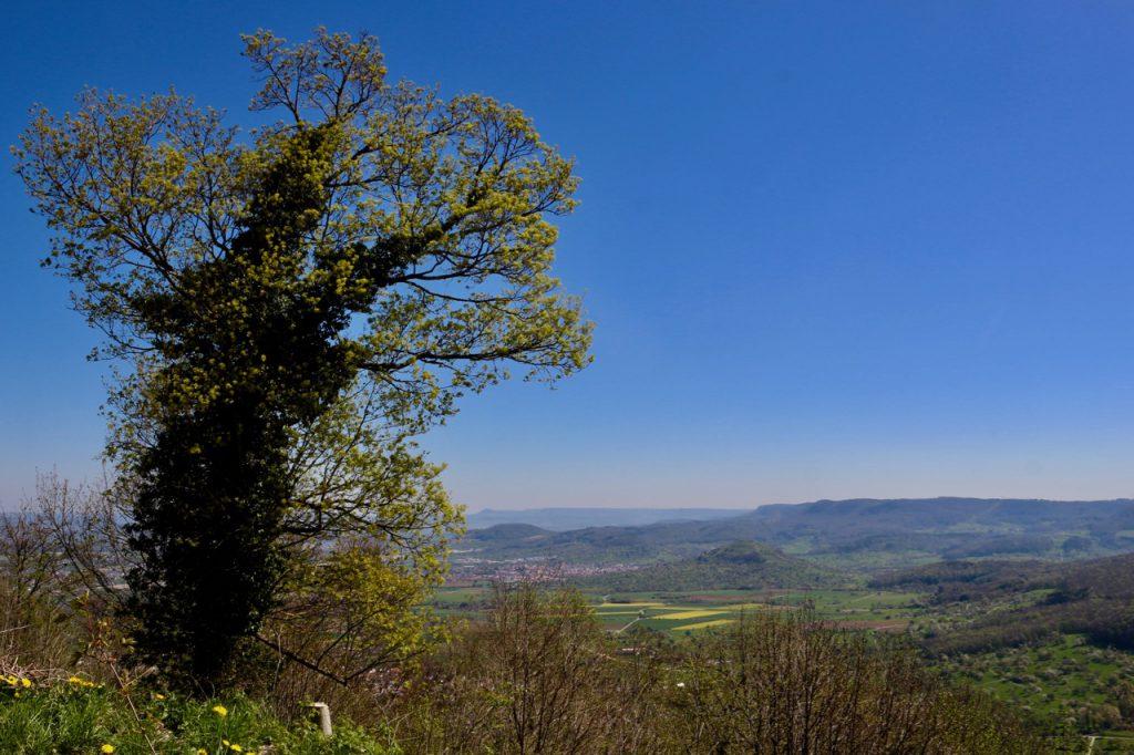 Linde mit Efeu vor Landschaft der Schwäbischen Alb