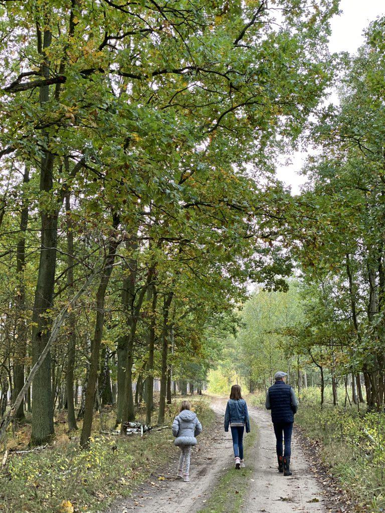 Papa mit Kindern auf Waldweg im Herbst, von hinten