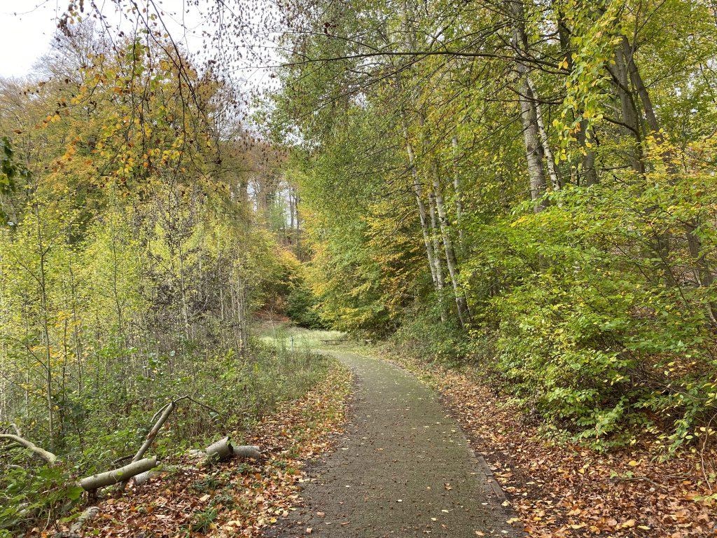 Waldweg im Herbst mit Birken und Buchenblättern
