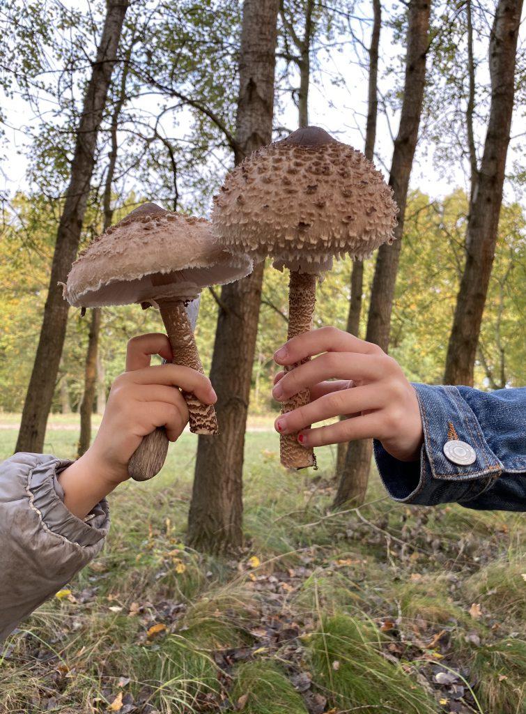 Kinderhaende mit jeweils einem großen Parasolpilz