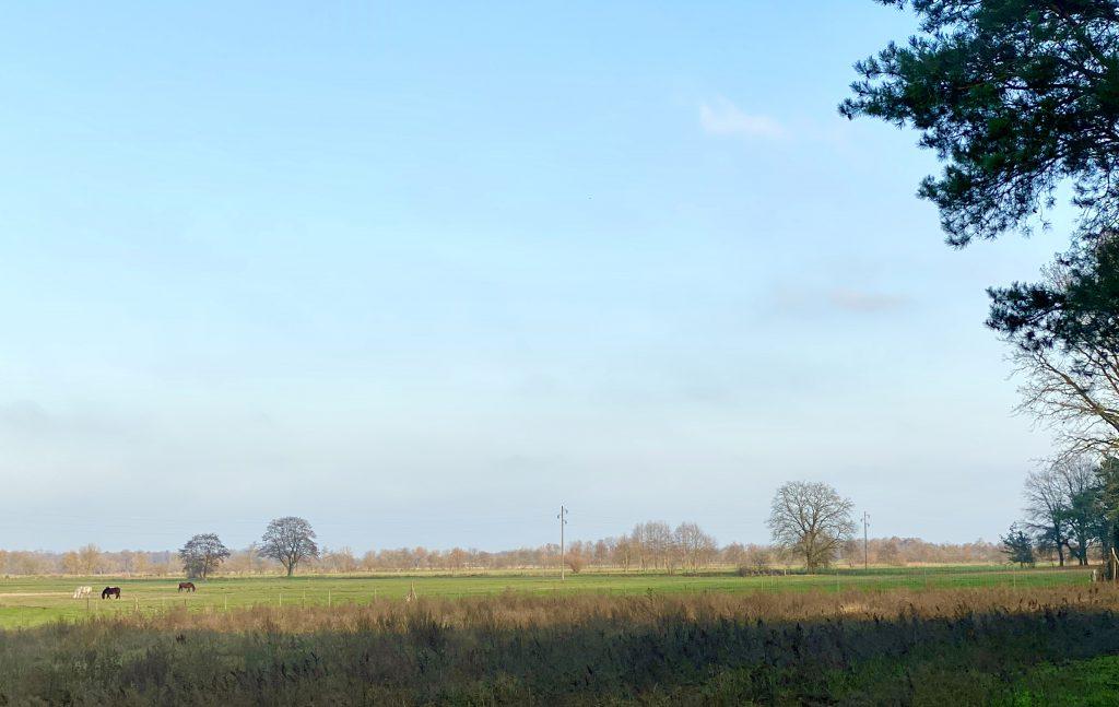 Novemverlandschaft: flache Felder mit kahlen Bäumen, drei Pferde weiden auf einer  Wiese