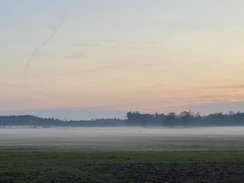 Landschaft (Weide und Waldrand) mit Bodennebel im Dezember