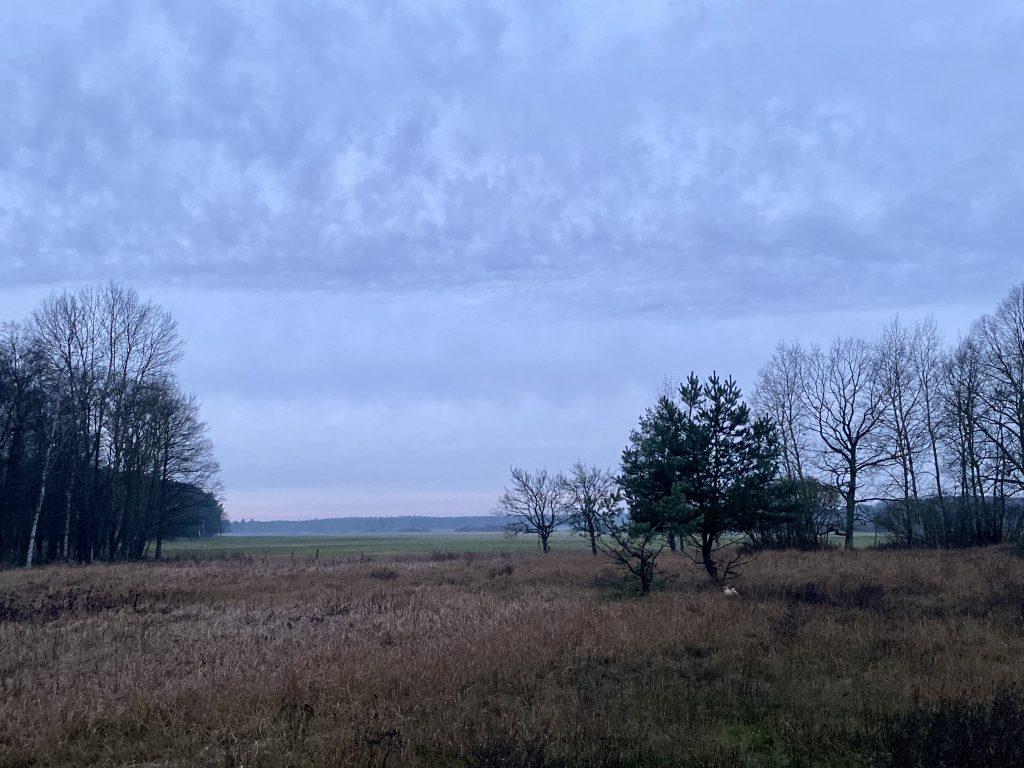 Weide- Heidelandschaft mit kahlen Bäumen und Kiefern