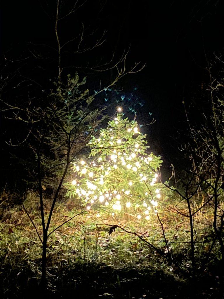 leuchtender Weihnachtsbaum mitten im Wald