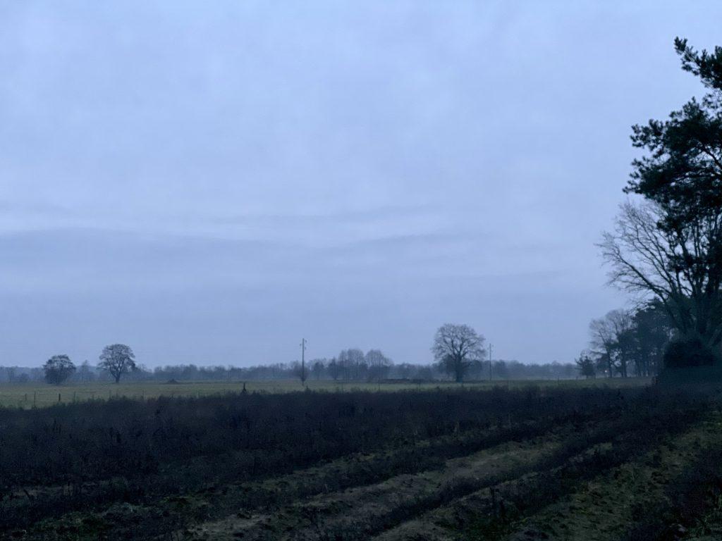 Dezembermorgen-Landschaft: Trüb, Acker mit kahlen Bäumen