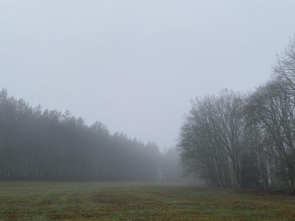 Nebel über Wiese zwischen hohen Bäumen