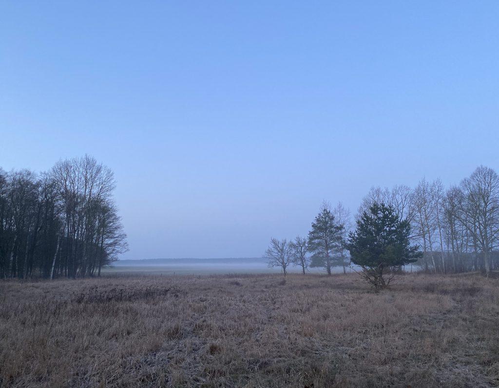 Feldlandschaft mit Bäumen und Bodennebel