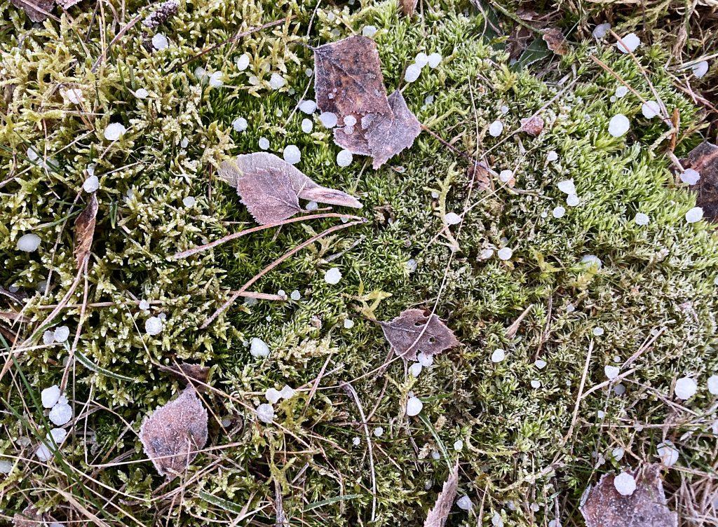 Moos und trockene Blätter und Hagelkörner