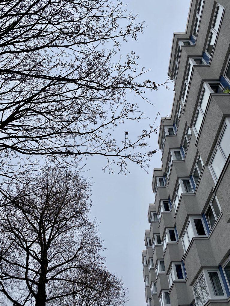 Baumsilhouette Und graues Hochhaus
