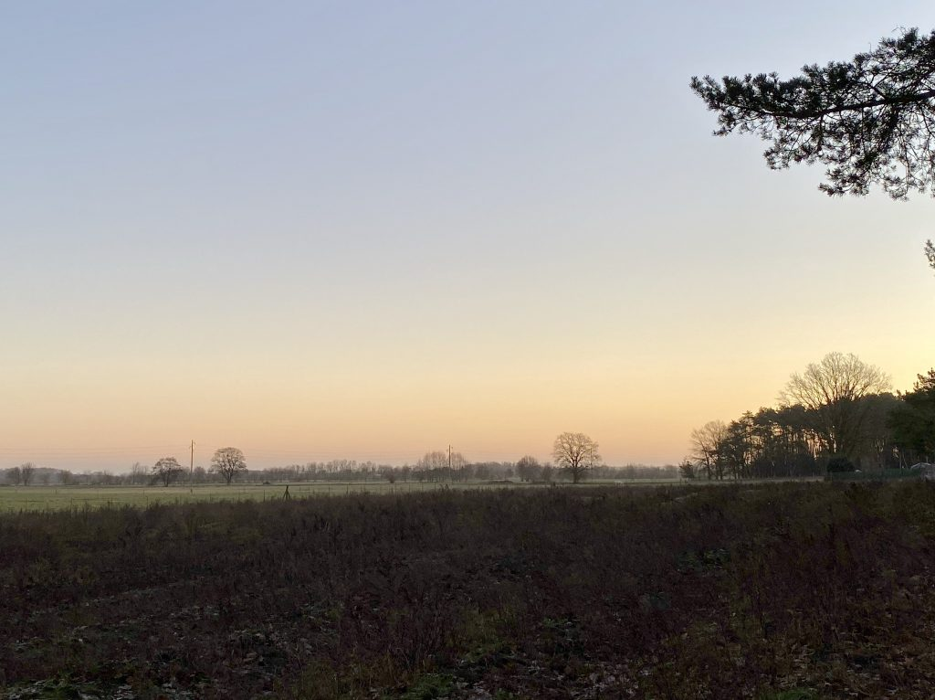 Sonnenaufgang im Winter, flaches Feld/Acker und Baumzweig im Vordergrund