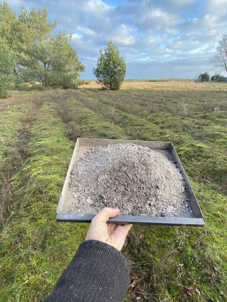 Ich halte ein Blech mit Holzasche über die Heide auf unserem Grundstück