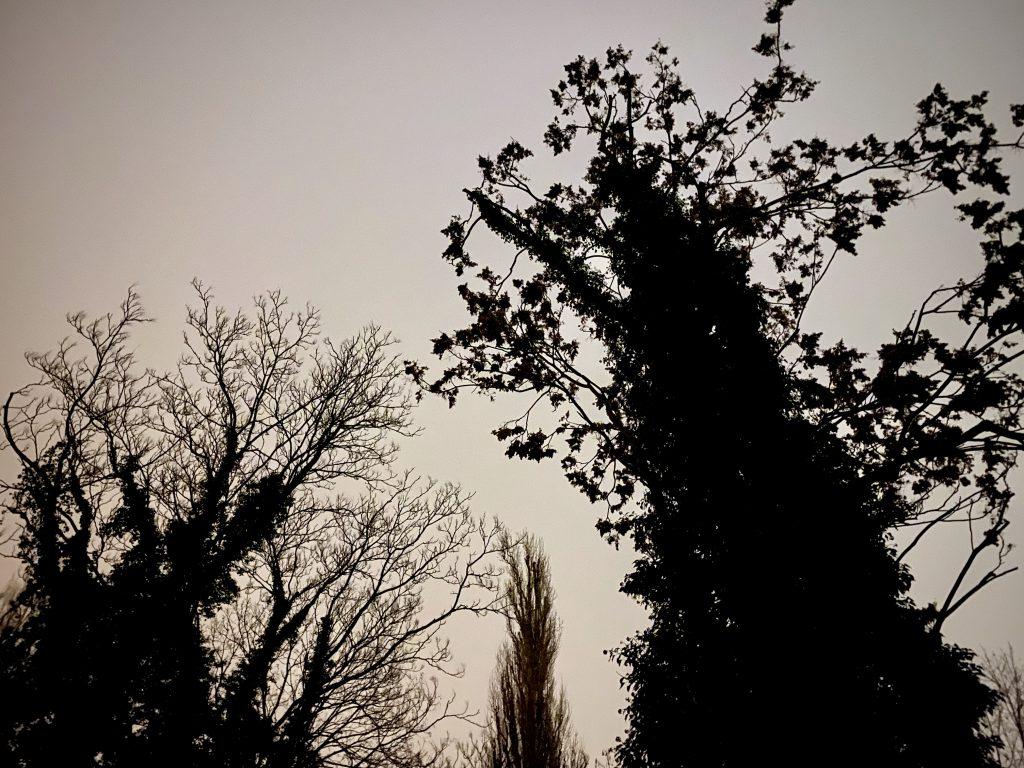 Baumsilhouetten gegen grauen Himmel