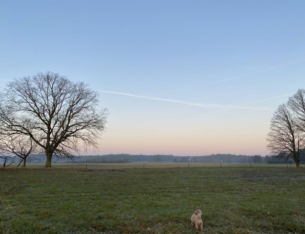 Hund auf Wiese bei Sonnenaufgang