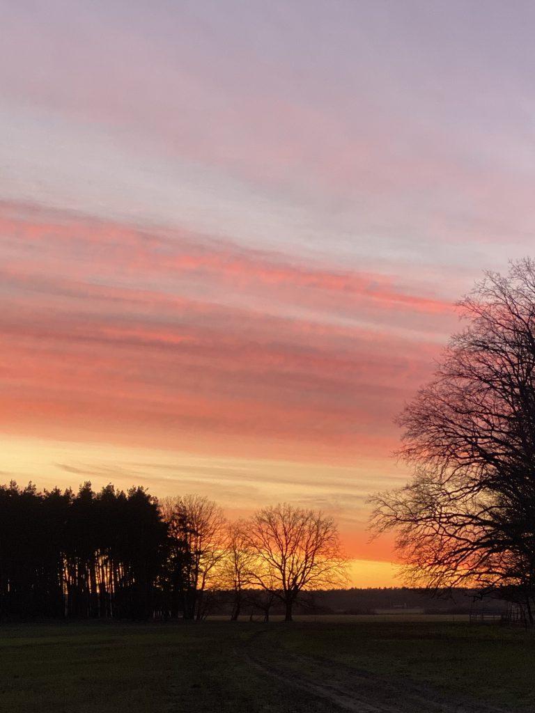 Sonnenuntergangsstimmung in kräftigem Rosa und Orange, über kahlen Bäumen
