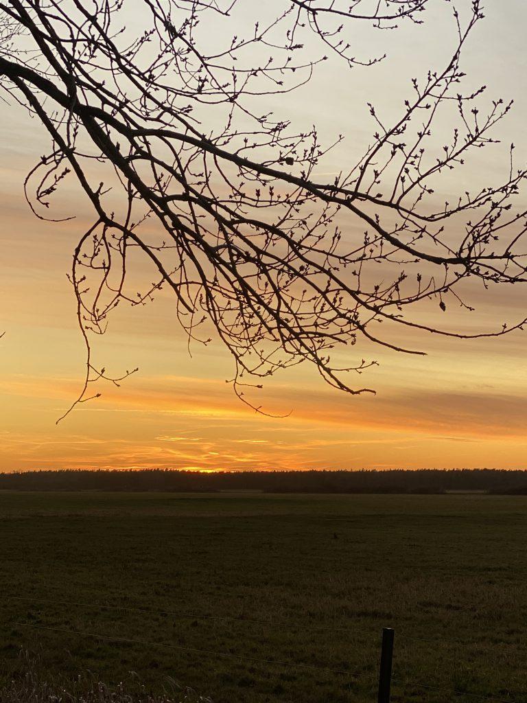 Sonnenuntergang hinter kahlem Zweig im Vordergrund