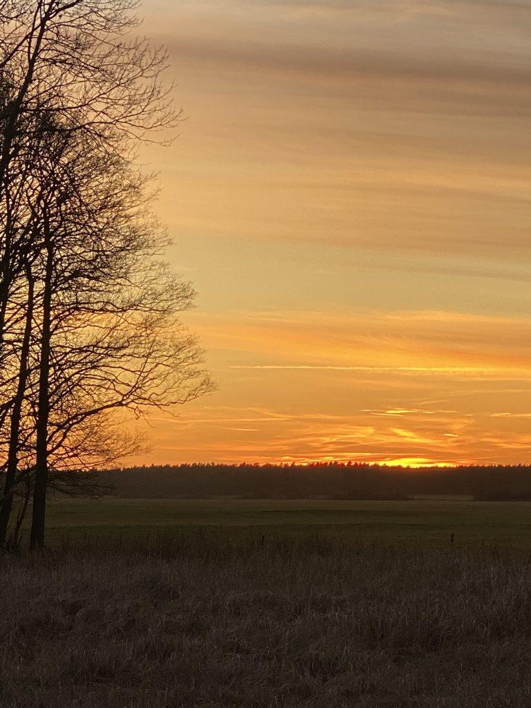 Sonnenuntergang mit einem kahlen Baum links