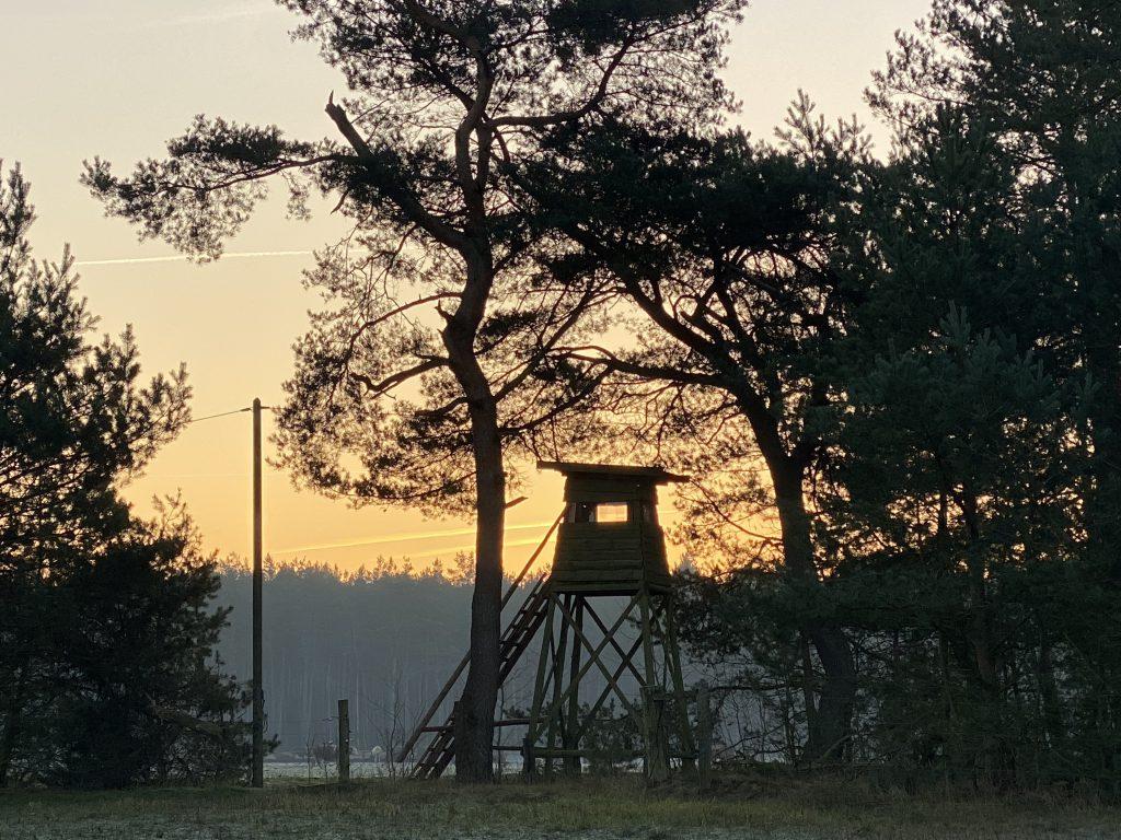 Hochsitz aus Holz unter Bäumen vor Sonnenaufgang