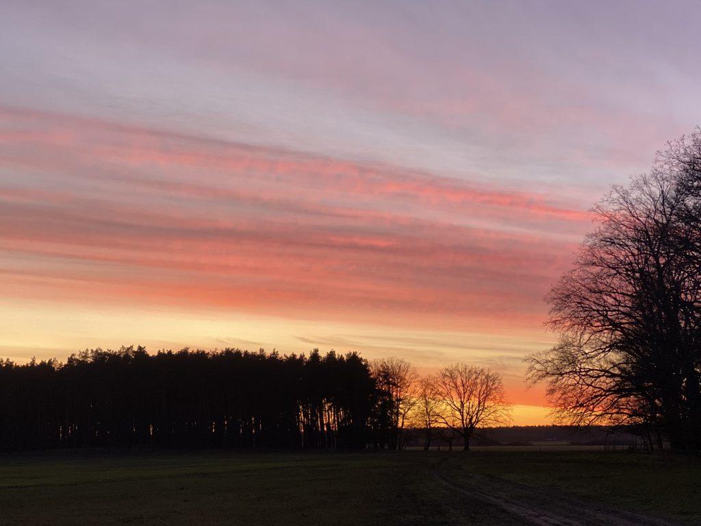Sonnenuntergangsstimmung über winterlich kahlen Bäumen in kräftigem Rosa