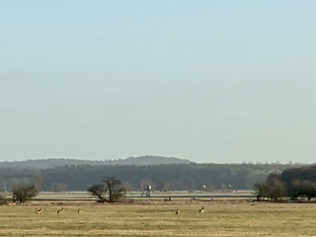 Mehrere Rehe von weit weg in winterlicher Feldlandschaft mit Bäumen und Wald