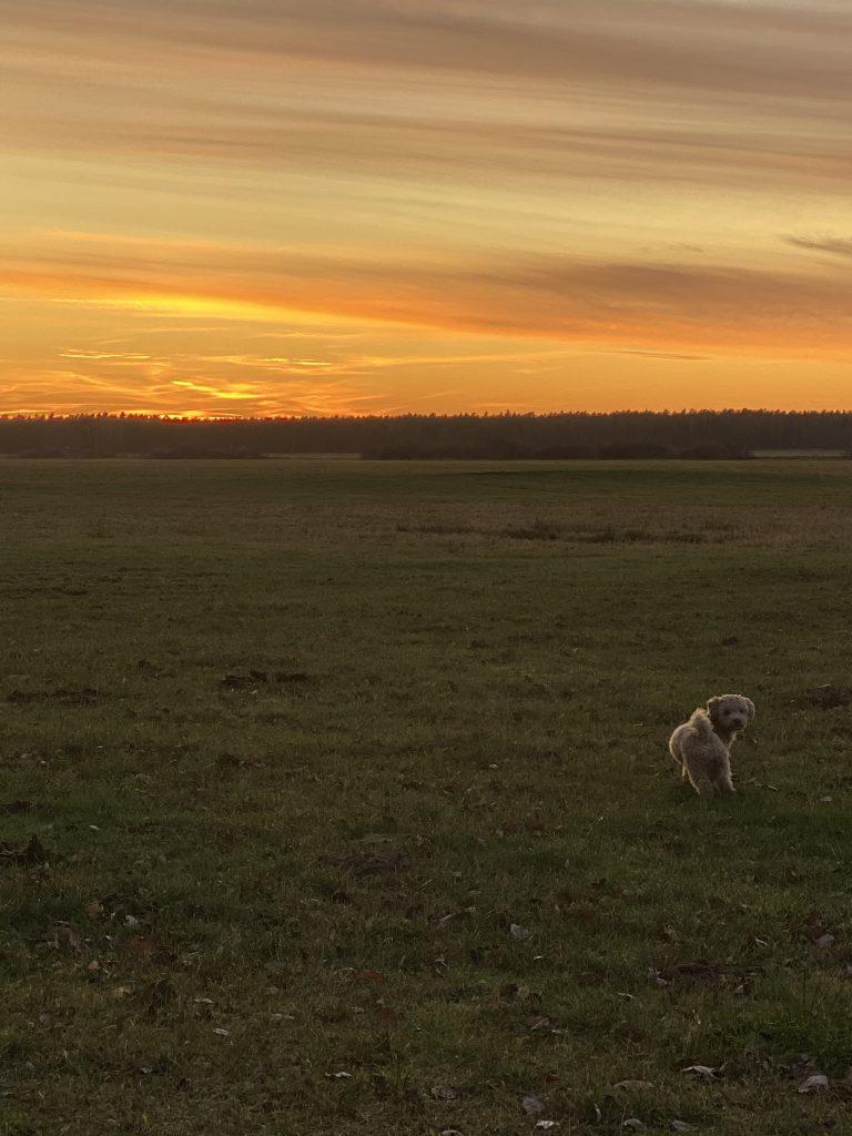 Sonnenuntergang und kleiner Hund davor auf Wiese