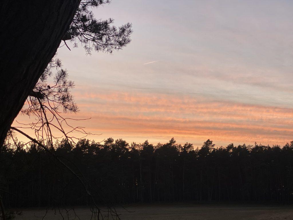 Sonnenuntergangsstimmung in rosa färben über Waldsaum