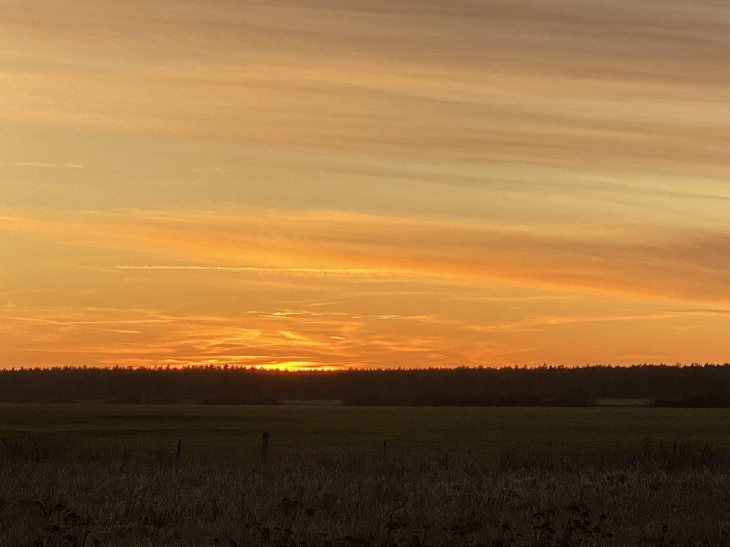 Sonnenuntergang über Waldrand, Sonne ist gerade untergegangen, orangenes Lichtspiel