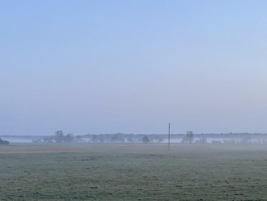 Bäume mit Bodennebel in Entfernung hinter Feld
