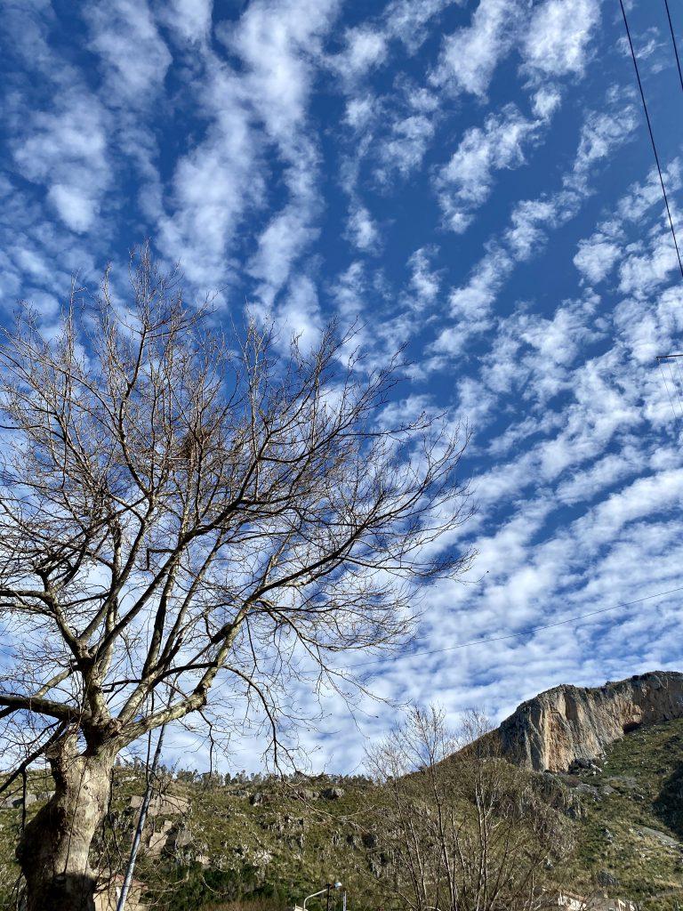 Blauer Himmel mit Wolkenstreifen und kahlem Baum