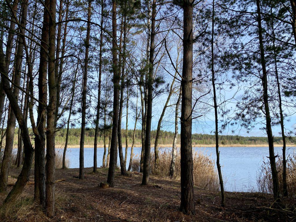 See mit Baum- und Schilfrand hinter Bäumen