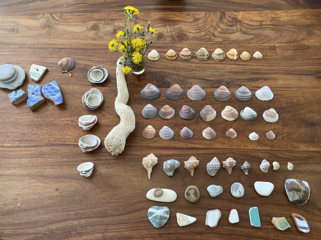 verschiedene Muscheln und Steine auf einem Holztisch aufgereiht