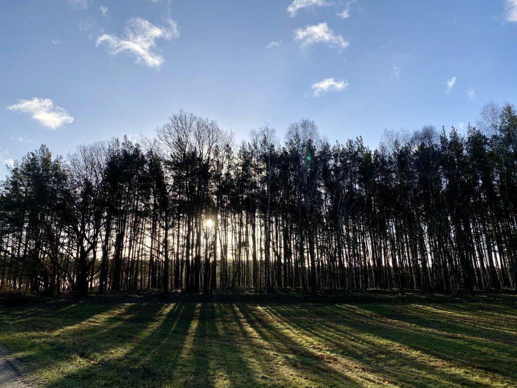 Waldrand durch den von hinten Sonnenstrahlen fallen und Streifen auf die Wiese zaubern