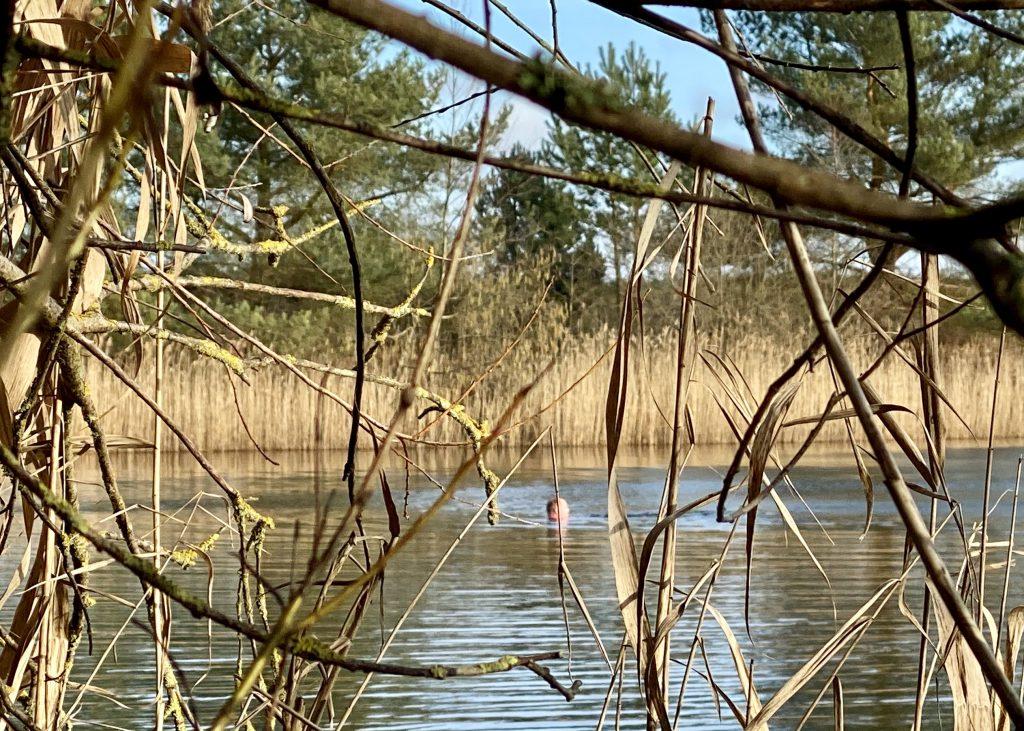 Schwimmer im Winter-See hinter Zweigen