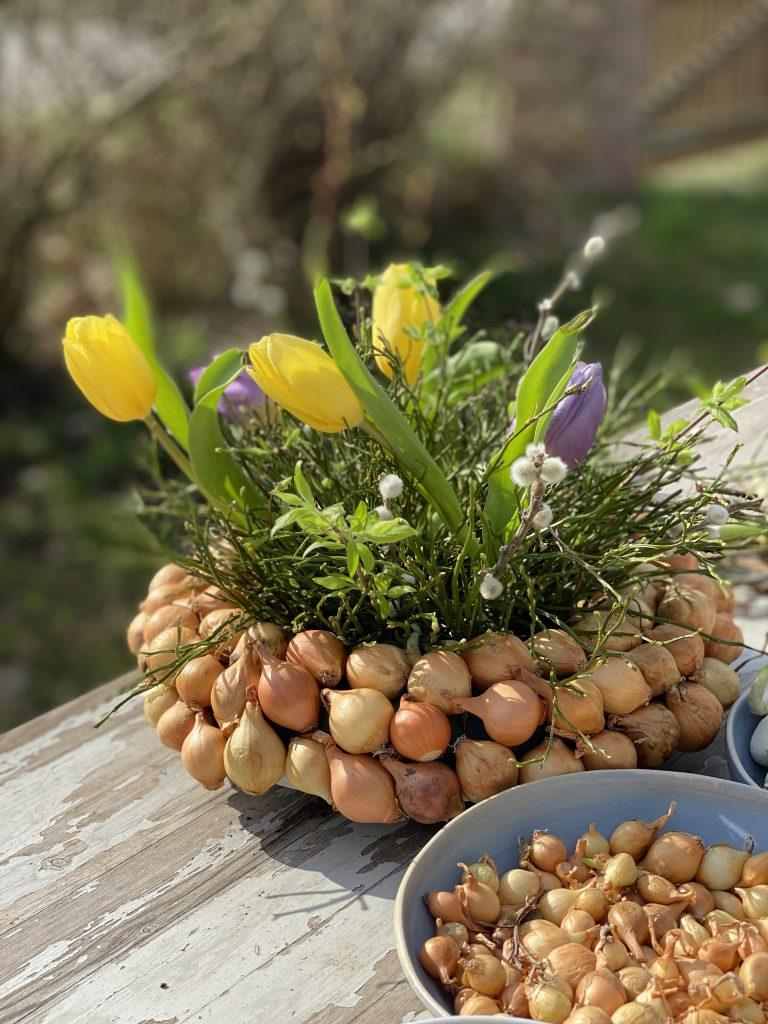 Dekoration mit Steckzwiebeln: dicker Kranz aus gelben Steckzwiebeln mit Blaubeerkraut und Tulpen auf Gartentisch draußen