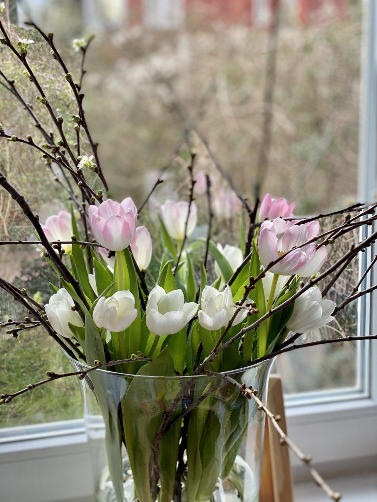 rosa und weiße Tulpen und knospende Zweige in Vase