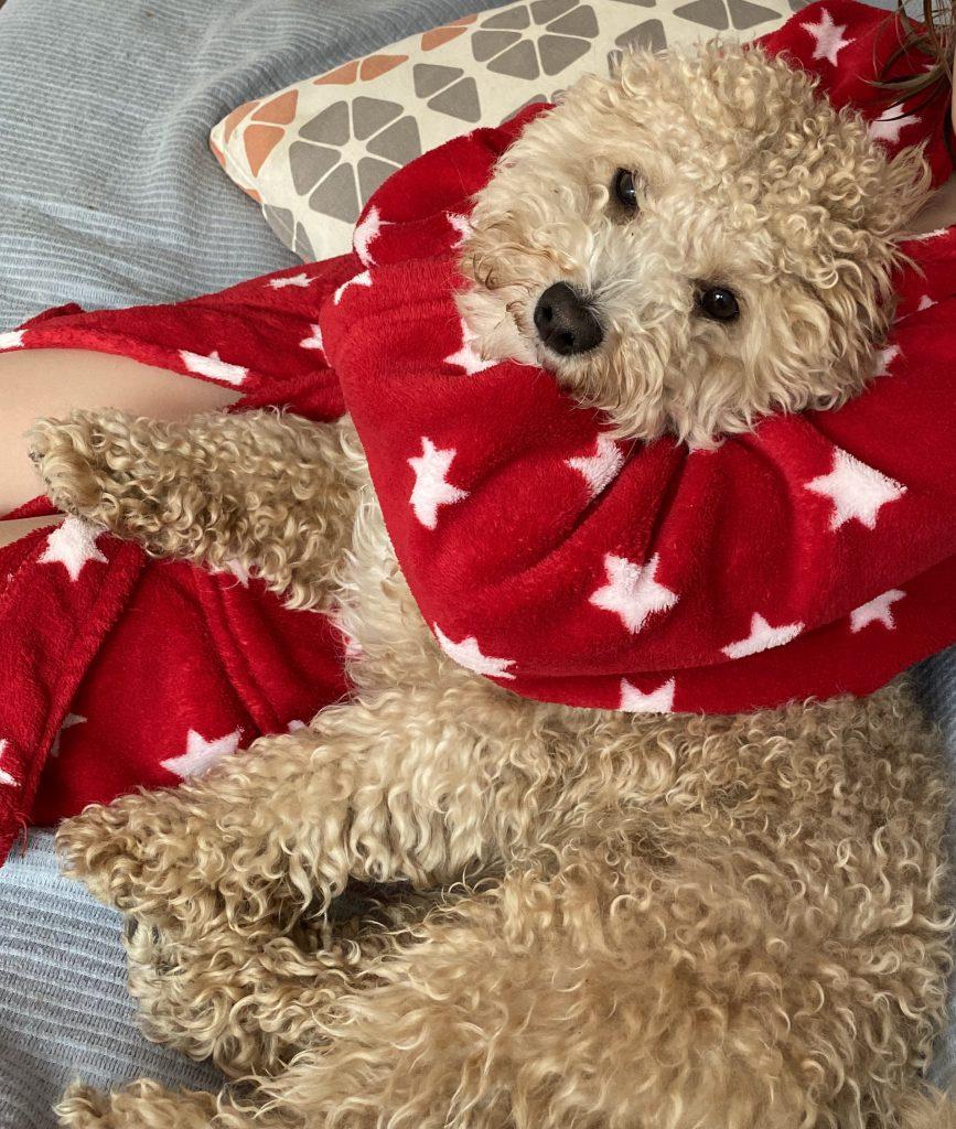 Kuschel-Hund im Arm eines Kindes