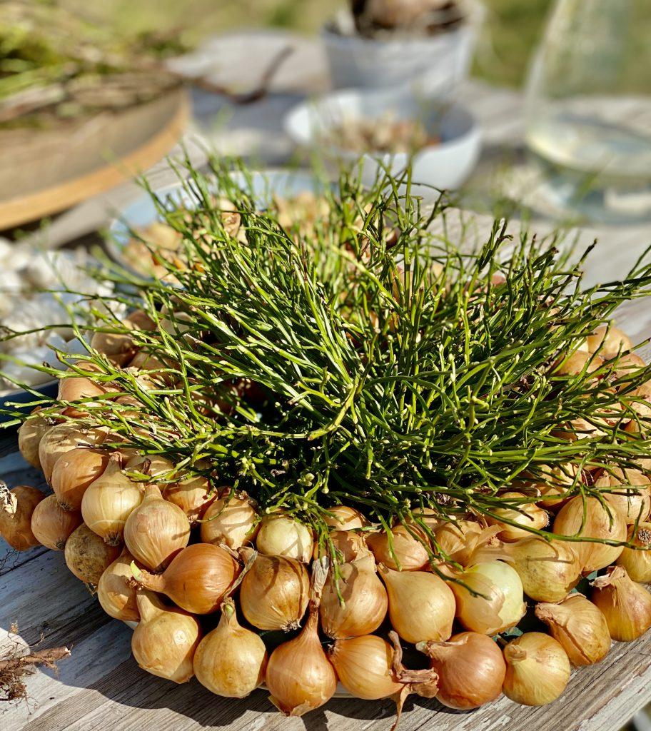dicker Kranz mit gelben Steckzwiebeln und Blaubeerkraut
