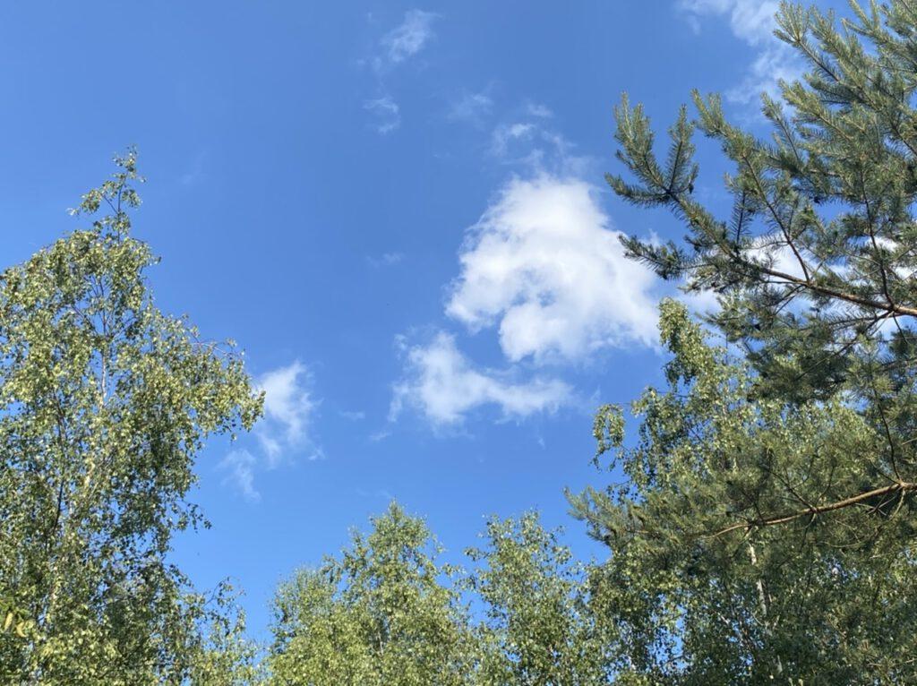 Der 5. der Glücksmomente der Woche vom 25. Juni bis 1. Juli 2020 war der blaue Himmel mit kleinen Wölkchen und grünen Baumkronen