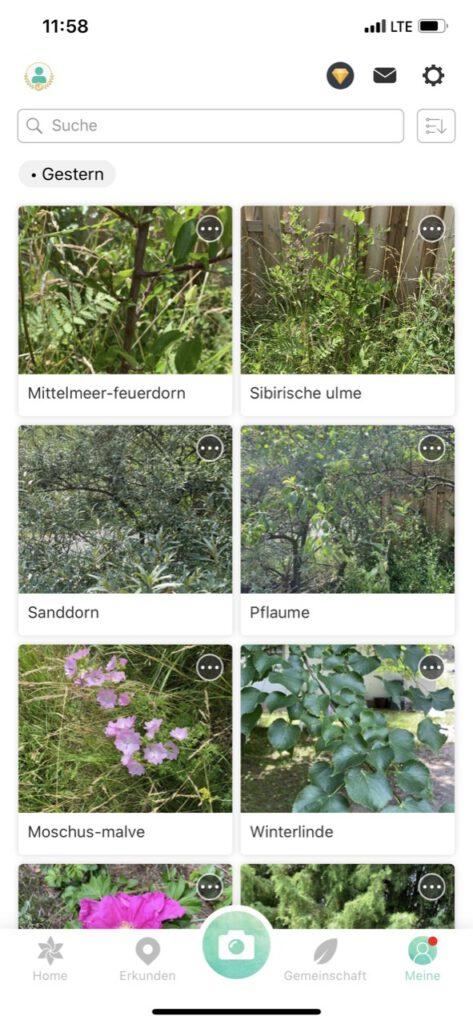 """Screenshot der Pflanzen-Bestimmungs-App """"Picture this"""" mit mehreren erkannten Blumen und Pflanzen, z.B. Sanddorn, Pflaume, Moschus-Malve und Winterlinde"""