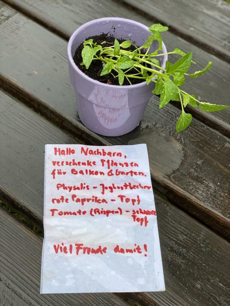 """Glücksmomente der Woche vom 18. bis 24. Juni 2020, Nr. 2: Topf mit kleiner Paprika-Pflanze auf Holztisch, mit Zettel davor """"Zu verschenken, Paprika-Pflanze"""""""