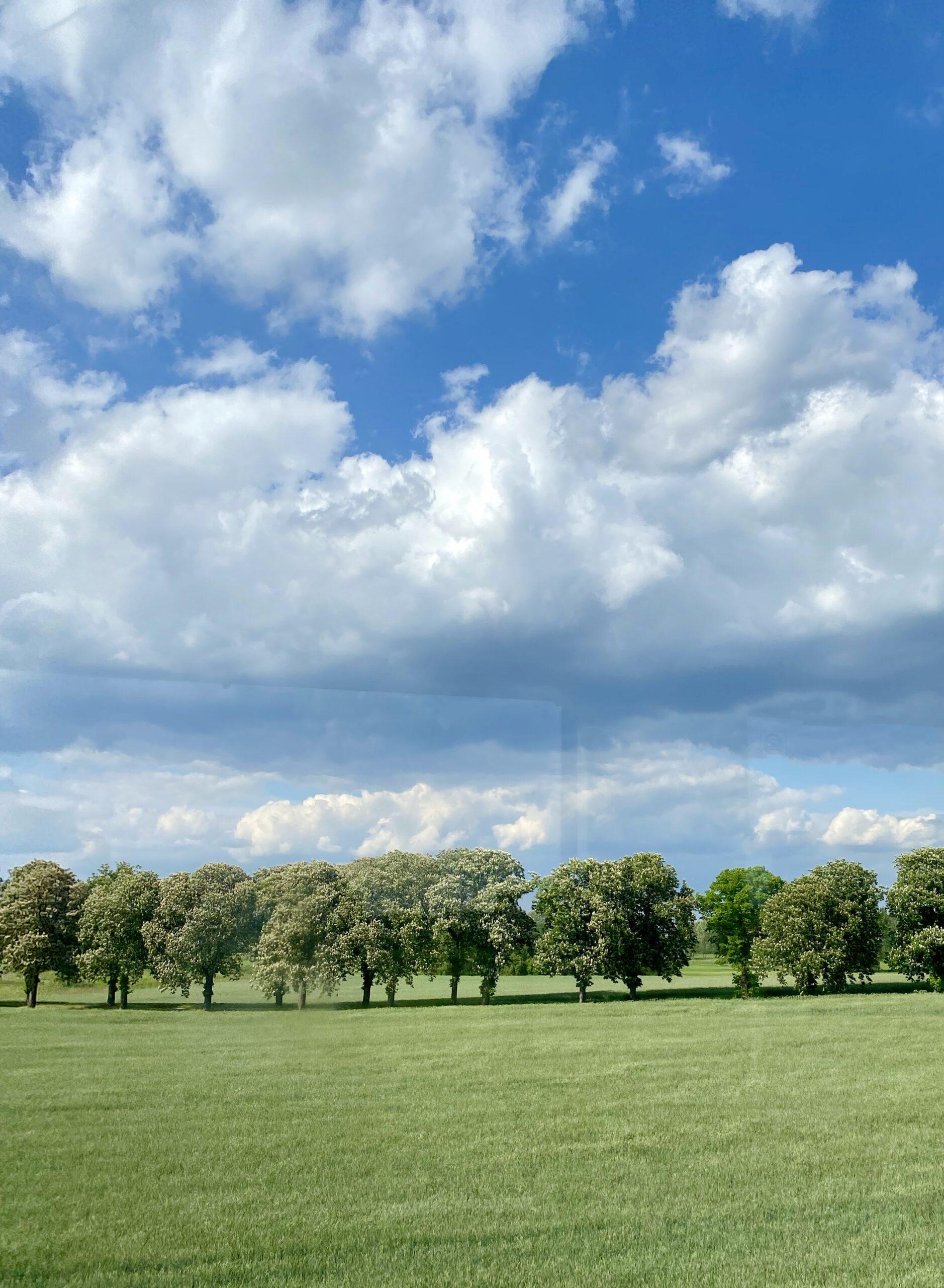 Glücksmomente der Woche vom 28. Mai bis 3. Juni 2020: Juni-Landschaft in Vorpommern mit Allee und blauem Himmel