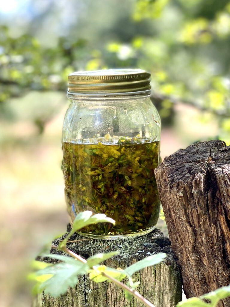 Johanniskrautöl selbst herstellen: Glas mit Pflanzenteilen und Öl auf Holzpflock vor Natur