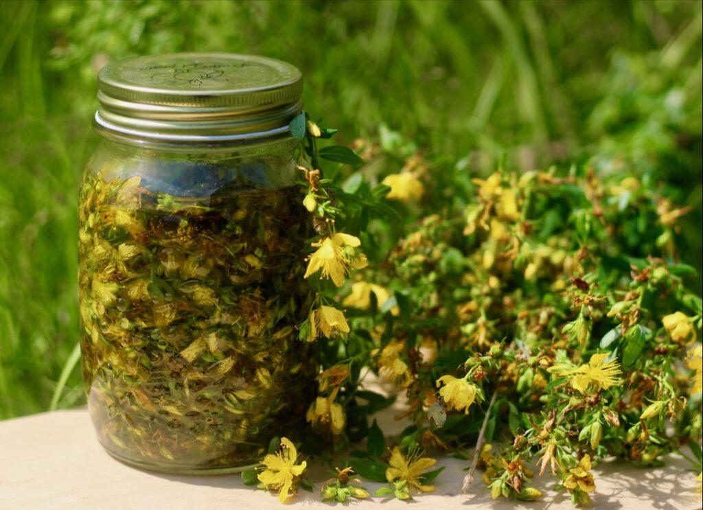 Johanniskrautöl selbst herstellen: Das Glas mit Pflanzenteilen und Öl in die Sonne stellen